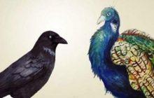 लोकप्रिय कौवा र मयूरको कथा, जसले तपाइँको आँखा खोलिदिनेछ
